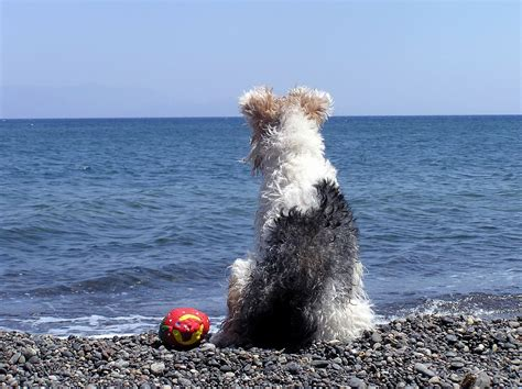 sea puppy enjoy at seaside on surfing dogs and sea