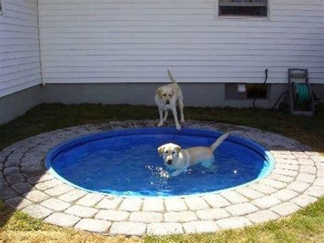 puppy pool build a diy pool to keep your pup cool healthy paws
