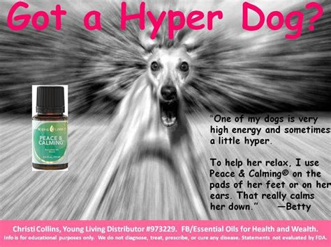 essential oils to calm dogs yleo peace and calming for dogs animals