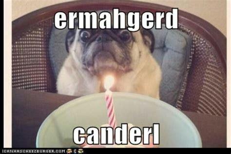 Ermahgerd Happy Birthday Meme - ermahgerd birthday pug via cheezburger funny
