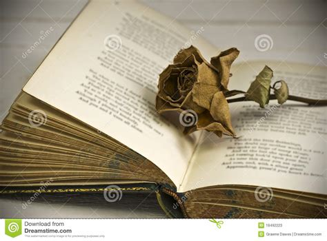 dead roses books withered on book stock photos image 18492223