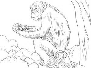 free printable chimpanzee coloring pages kids