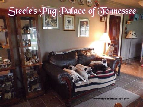 pug palace 17 best images about s pug palace of tennessee on carpets plays