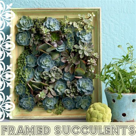 How To Propagate Cacti Succulents Apartment Therapy - oh so diy framed succulent