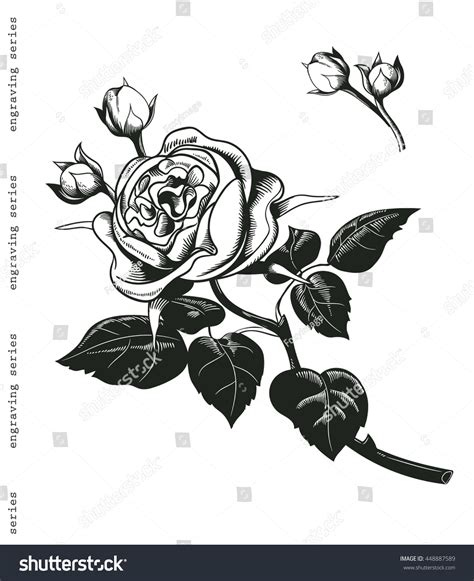roses rose buds and ornate royalty free sketched bouquet of a white