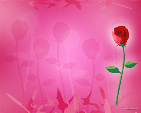 themes of rose pink rose backgrounds wallpaper cave