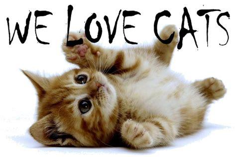 cat lovers websites feline personalities