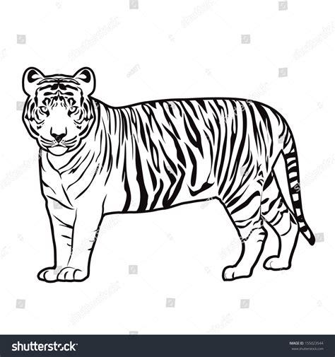Tiger Outline Images by Tiger Outline Vector 155023544