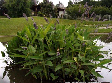 plante pour etang jardin les plantes humides de berges et d 233 tangs