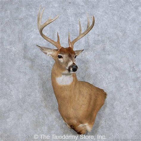 deer wall l 14085 e whitetail deer wall pedestal taxidermy mount