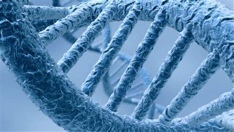 la biologia delle credenze ebook biologia ed ecologia delle credenze