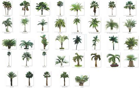 como sellaman las imagenes sin fondo colecci 243 n de 193 rboles y arbustos png con fondo transparente