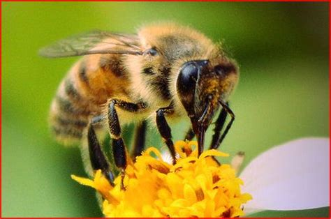 If The Bees Die, So Will We! | Silver Bulletin e-News Magazine Royal Jelly Benefits