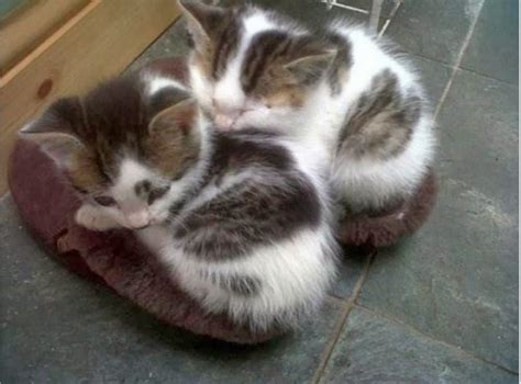 kitten slippers cats part 83 40 pics 10 gifs amazing creatures