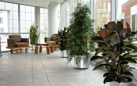 Lobby Planters by Reading Ma Interior Landscaping Office Plant Care
