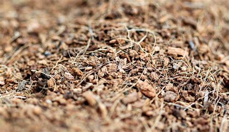 organic mulch for vegetable garden common mulches for vegetable gardens harvest to table