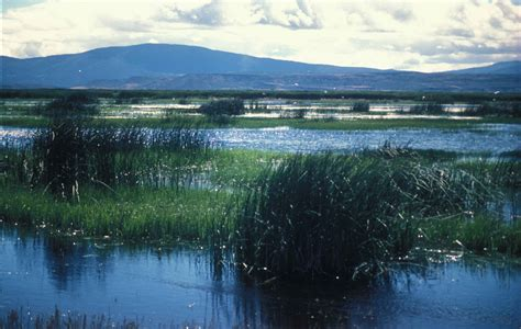 file image of wetland landscape with mountains in the
