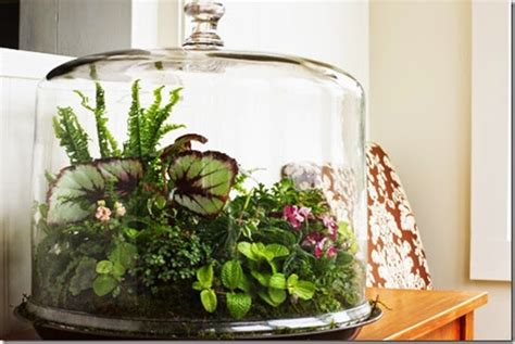 best plants for closed terrariums all in the detail a beautiful terrarium