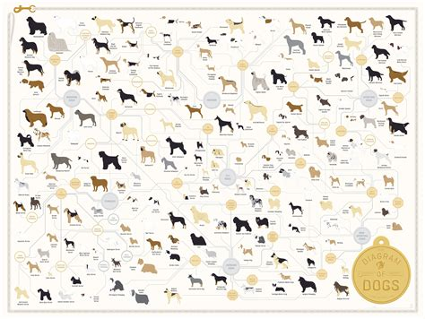 diagram poster pop chart lab design data delight the diagram of dogs
