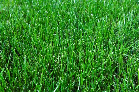 Autumn Tips For Your Lawn And Garden Munns Gardening Blog