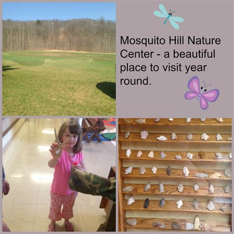 pictures on mosquito hill christmas tree farm easy diy