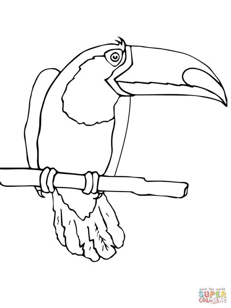 coloring page of a toucan bird toucan bird coloring page free printable coloring pages