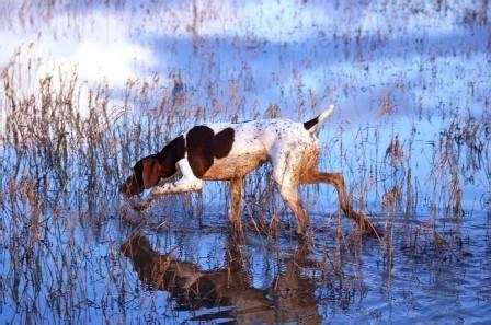 atc pavia a caccia ospiti dell oltrep 242 pavese caccia passione