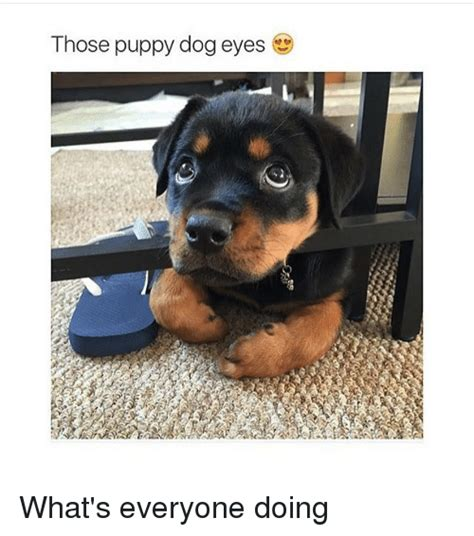 Puppy Eyes Meme - 25 best memes about puppy dogs puppy dogs memes