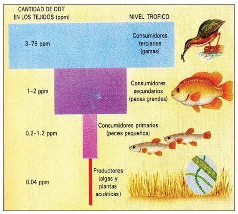 cadena alimenticia acuatica consumidores primarios pir 225 mides ecol 243 gicas 187 blog de biolog 237 a