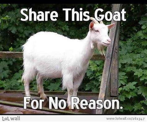 Goat Memes - goat memes flickr photo sharing