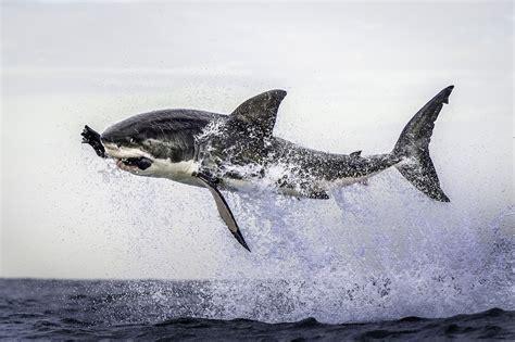 imagenes impactantes e impresionantes 15 de las fotos m 225 s impresionantes que ver 225 s en tu vida