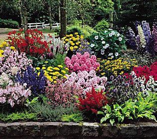 Qvc Garden Bj Flora Direct 22 Cottage Garden Plants Qvc