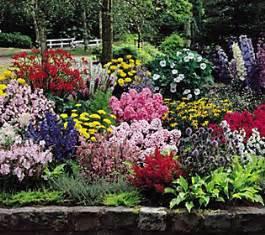 bj flora direct 22 cottage garden plants qvc com