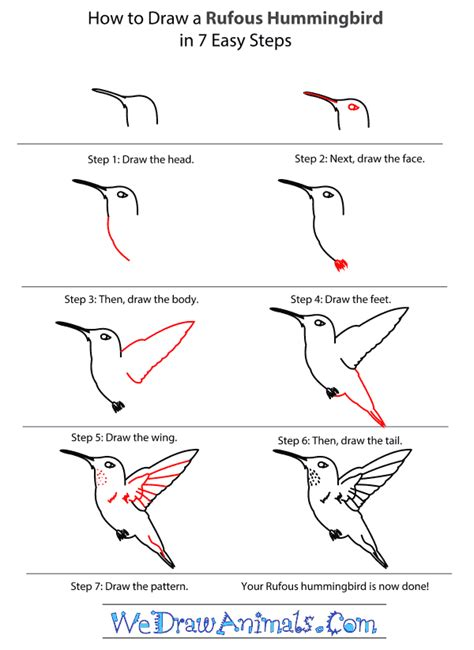 how to draw a rufous hummingbird