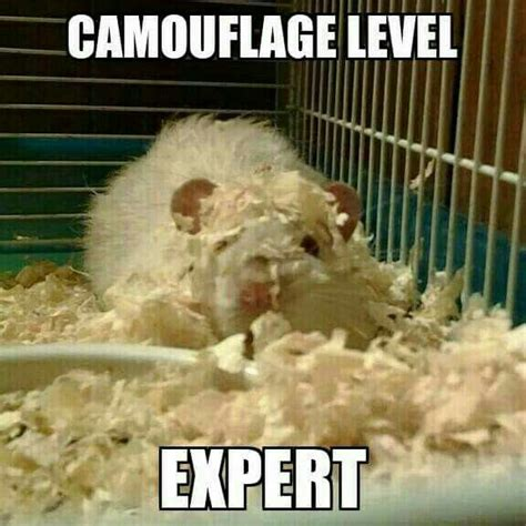 Rodent Meme - 45 best rat memes images on pinterest rats funny pets