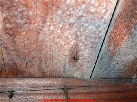 White Mold In House by Auto Forward To Correct Web Page At Inspectapedia