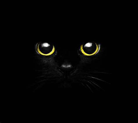 wallpaper black zedge download cute black cat eye wallpapers to your cell phone