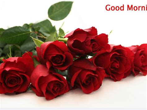 good morning  red rose flower background