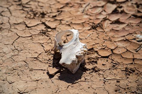 Who Find Dinosaur Bones How To Find Dinosaur Bones In The Gobi Desert