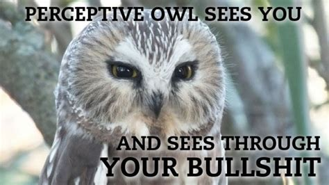 Owl Memes - keepin babel at bay 20 hilariously adorable owl memes