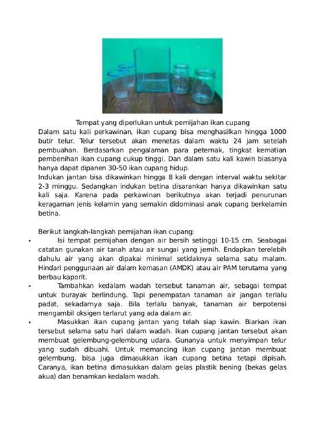 Pakan Ikan Cupang Cacing Kering panduan budidaya ikan lele ikan nila ikan gurami dan