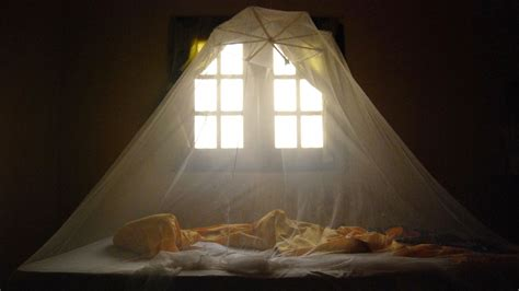 bed nets mosquito behavior is evolving and malaria is benefitting