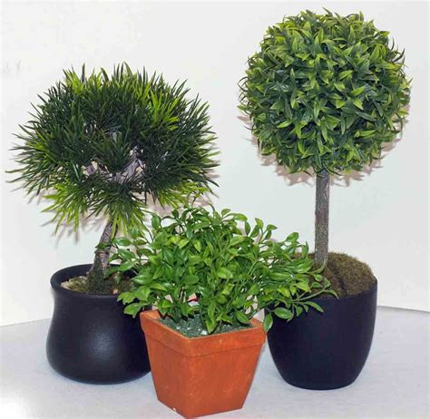 cheap indoor plants cheap indoor plants flowering indoor plant 3d models 100