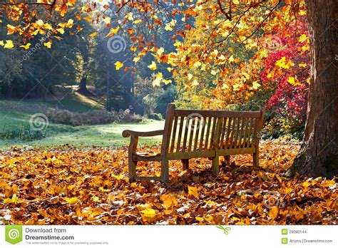 autumn park bench bench in autumn park stock images image 28080144