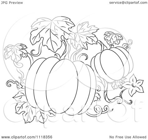 coloring pages of pumpkin vines clipart of a black and white pumpkin vine royalty free