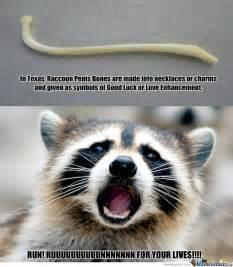 Raccoon Meme - not so lucky for raccoons by douglasdegraw meme center