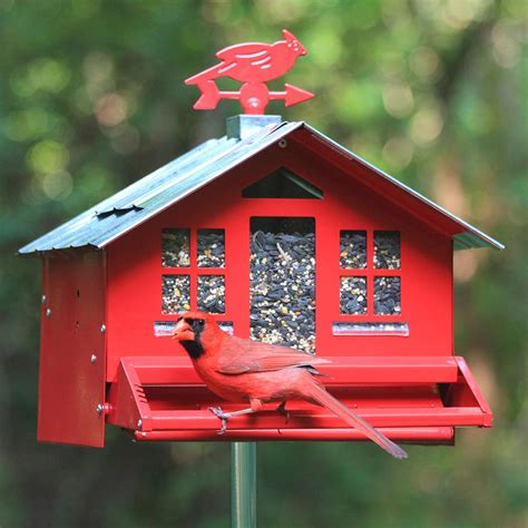 perky pet red squirrel be gone ii country house with