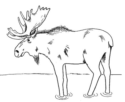 moose template moose coloring page 2 free printable coloring pages