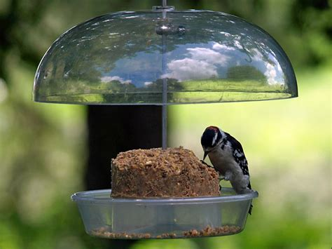diy suet bird food petdiys com