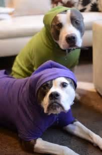 hoodies for pitbulls pit bulls in hoodies pit bull